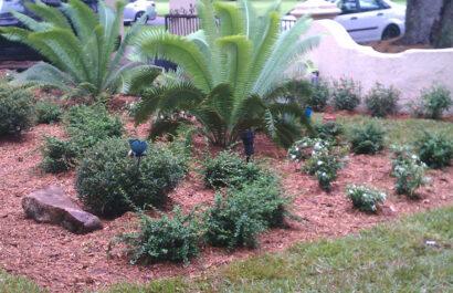 Cortada Landscape Design | Miami Residential Landscaping Project