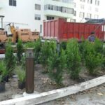 Cortada Landscape Design | Miami Beach Commercial Landscaping & Irrigation/Sprinkler Project