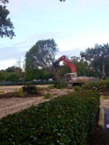 Miami-Tree-Removal
