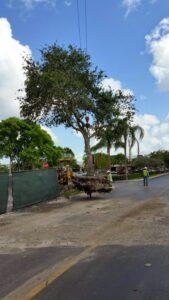 Miami-Tree-Transfer