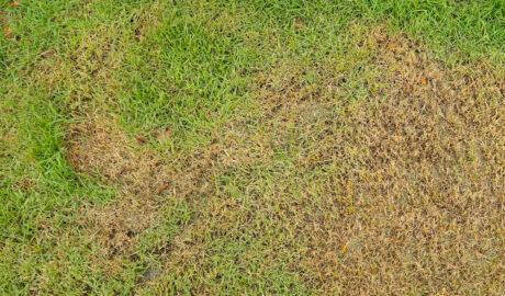 Green grass and dry grass | Miami, FL