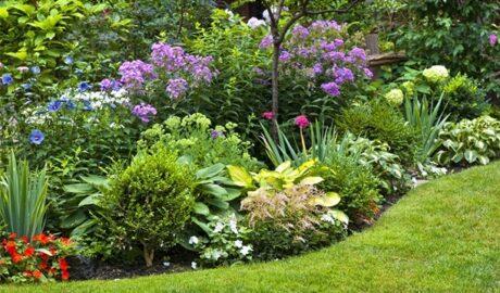 Shrubs - Garden Border Ideas & Tips