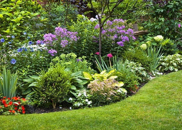 Best Shrubs To Plant As Garden Borders