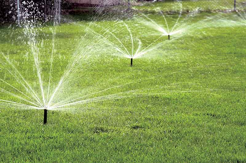How to Ensure All Your Plants Are Getting Enough Water