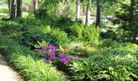 Attractive Garden Plants that Tolerate Shade