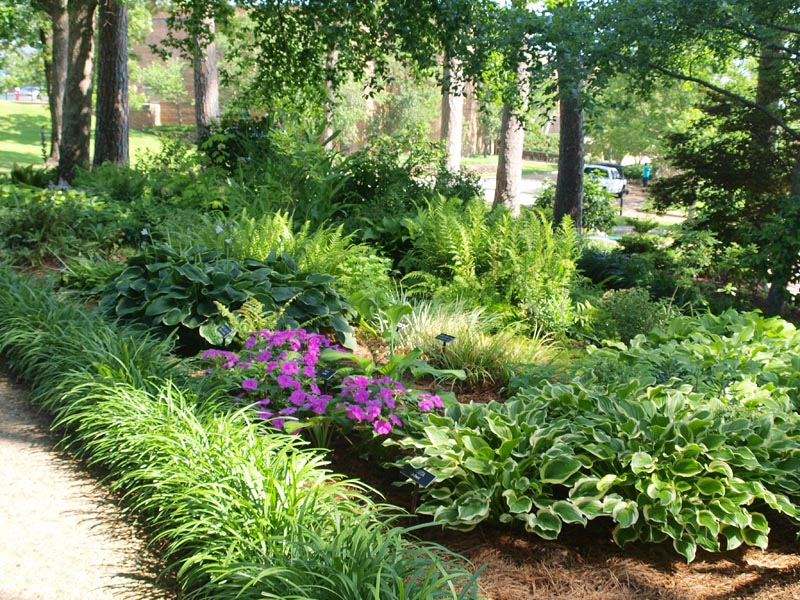 Attractive Garden Plants that Tolerate Shade on plant privacy screen design, plant by number garden plans, plant nursery design, plant landscaping design, plant trees design, plant terrarium design, plant flower garden design, plant pots design, plant with long curly leaves,