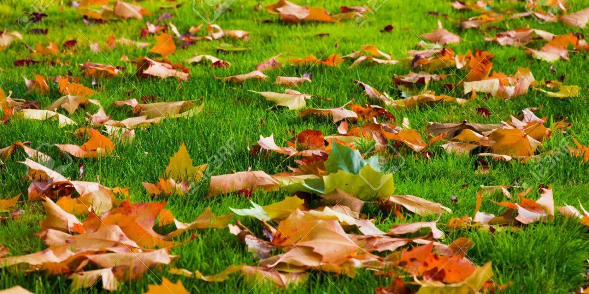 Fall Lawn Care Tips - Cortada Landscape Design