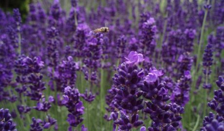 Spring Flowers That Attract Bees and Promote Pollination