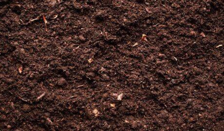 Irrigation Tips for Dense Soil