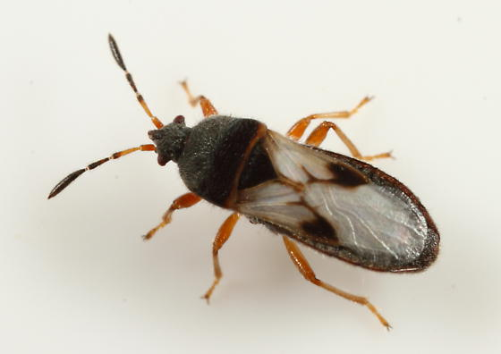 Lawn Pest and How To Treat Them