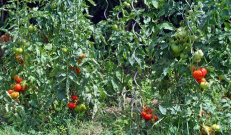 Easy Steps to An Edible Landscaping DIY Garden